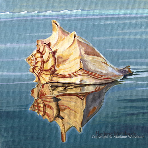 Conch Reflection